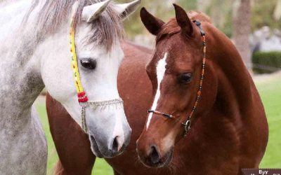 Horse Health Forums