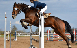 Top 3 Benefits of Reading Horse Health Articles
