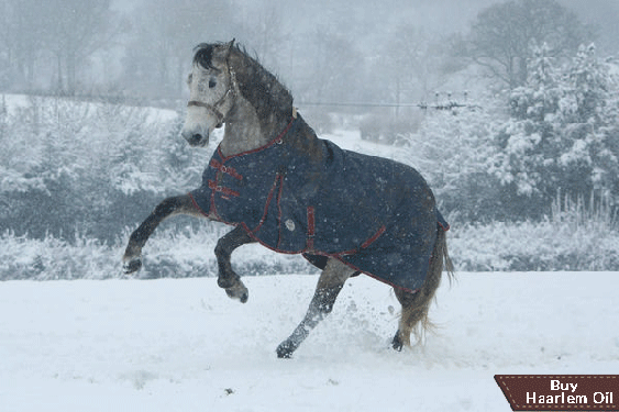 Horse Health Tips: Winter Care