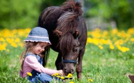 Horse Health Advice