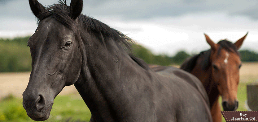 8 Useful Horse Health Facts and Tips