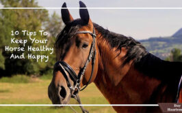 Best Top 10 Tips To Keep Your Horse Healthier and Happy